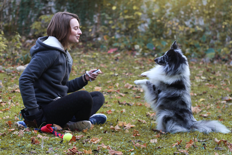 Comment trouver le bon éducateur canin en positif ?